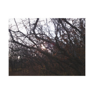 Sonnenschein durch den Baum-Leinwanddruck Leinwanddruck