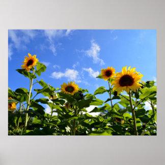 Sonnenschein u. Sonnenblumen Poster