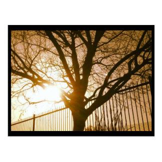 Sonnenuntergang-Baum-Silhouette-Postkarte Postkarte