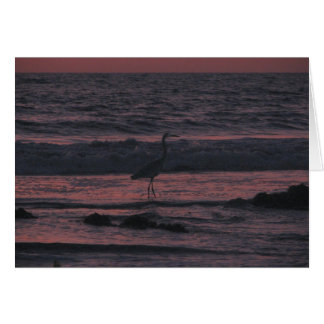 Sonnenuntergangseevogel nahe San Diego, Karte