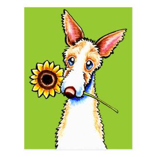 Sonnige Ibizan Jagdhund-Drahthaar Weg-Leine Art™ Postkarte