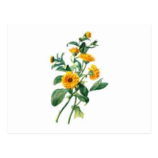 Sonnige Ringelblumen gezeichnet von der Natur Postkarte
