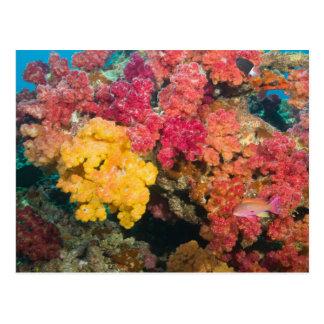 South Pacific, Fidschi, Regenbogen-Riff in Taveuni Postkarte