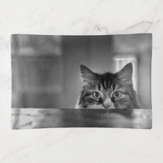 Spähen des Katzetrinket-Behälters Dekoschale