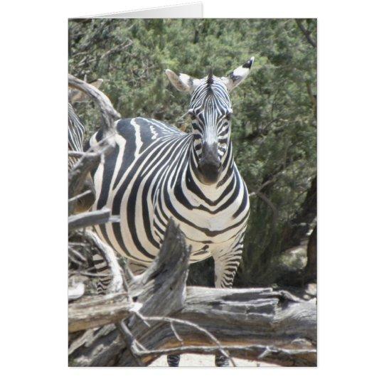 Spannen-Ohr Zebra-Geburtstagskarte Grußkarte