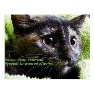 Spay bitte Ihre Katze verhindern unerwünschte Postkarte