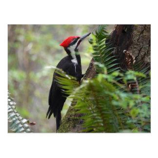 Specht auf Baum Postkarte