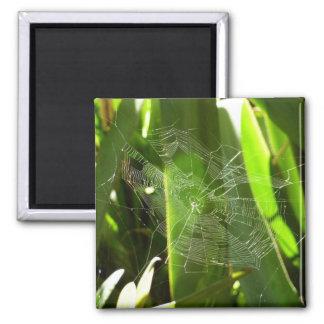 Spiderweb in der tropisches Blätter-grünen Natur Quadratischer Magnet