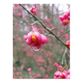 Spindel-Baum und Wasser-Tröpfchen Postkarte