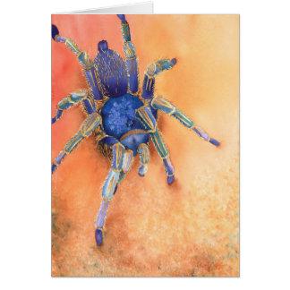 Spinne - Tarantula Karte