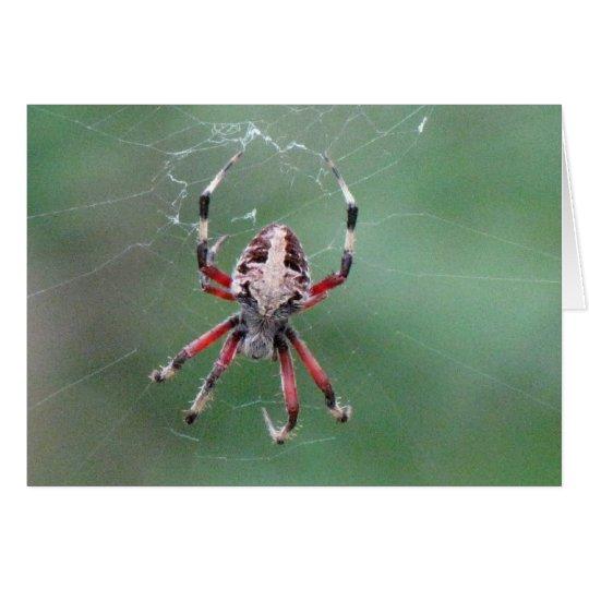Spinnen-Gruß-Karte Grußkarte