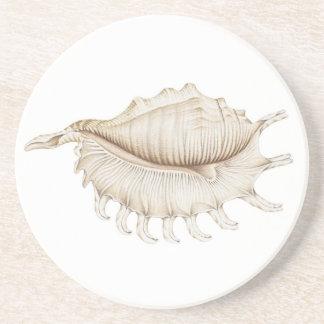 Spinnen-Tritonshorn-Muschel im Sandstein Untersetzer