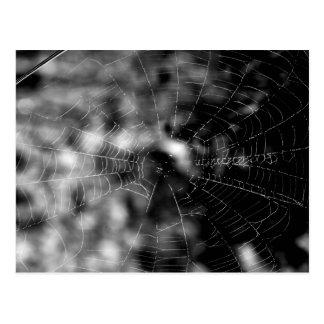 Spinnennetze machen unwiderstehliche Formen Postkarte