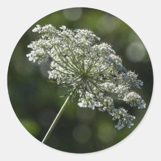 Spitze-weiße Wildblume-Aufkleber der Königin-Anne Runder Aufkleber