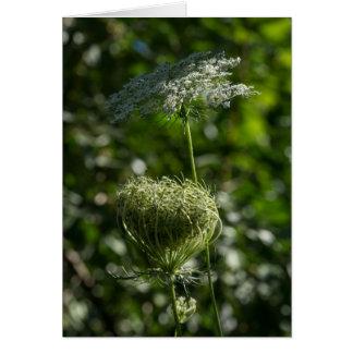 Spitze-weiße Wildblume-Karte der Königin-Anne Karte