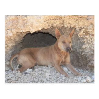"""Spitzenkerben-Hund""""Mookie"""" Höhlenkunde mit mir Postkarte"""