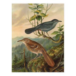 Spottdrossel und Brown Thrasher Postkarte