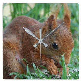 Squirrel ~ Écureuil ~ Eichhörnchen  ~ by GLINEUR Quadratische Wanduhr