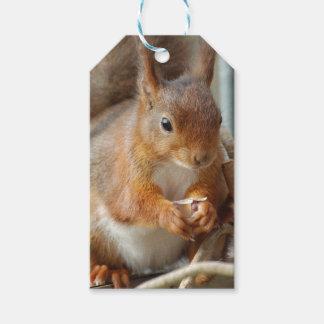 Squirrel ~ Écureuil ~ Eichhörnchen  ~ GLINEUR Geschenkanhänger