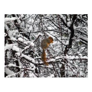 Squirrel im Schnee 6167 Postkarte