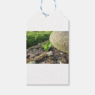 St Patrick Tageshintergrund mit Klee durch Stein Geschenkanhänger
