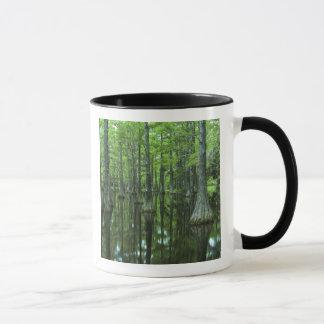Staatlicher Wald USA, Florida, Apalachicola, kahl Tasse