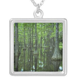 Staatlicher Wald USA, Florida, Apalachicola, kahl Versilberte Kette