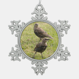Starlings Schneeflocken Zinn-Ornament