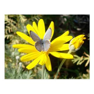 Staubiger blauer Schmetterling Postkarte