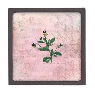 Staubiger rosa Vintager Viola Schachtel