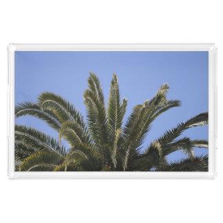 Staycation Palme-sonnige blauer Himmel-Fotografie Acryl Tablett