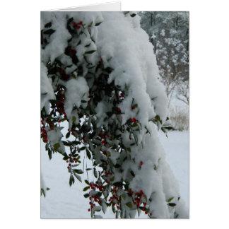 Stechpalme im Schnee Karte