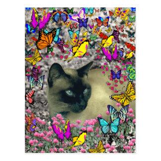 Stella in der postkarte