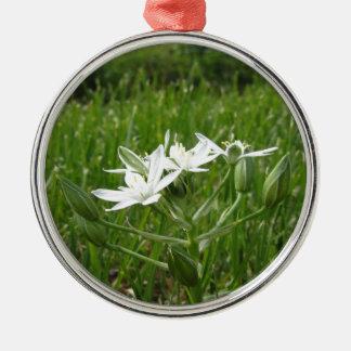 Stern von Bethlehem-Blumen Ornithogalum umbellatum Silbernes Ornament