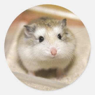 Sticker Rond PMT le hamster de bébé : Regard fixe