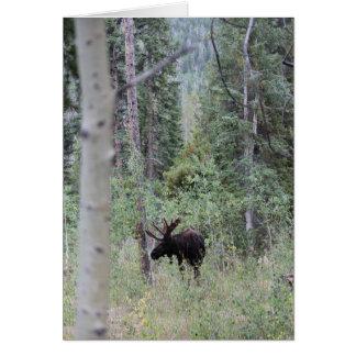 Stier-Elche im Holz Grußkarte