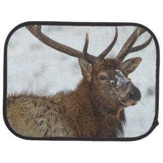 Stier-Elche im Winter in Autofußmatte
