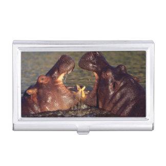 Stiere des Hippopotamus-(Hippopotamus Amphibius) Visitenkarten Etui
