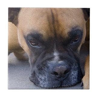 Stillstehende Boxer-Hundefliese Fliese