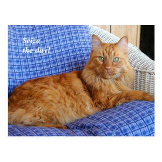Stillstehende Katzen-Postkarte Postkarte