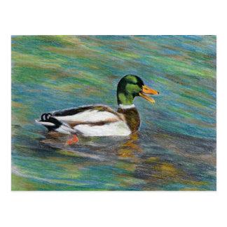 Stockenten-Ente farbiges Bleistift-Zeichnen Postkarte