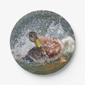 Stockenten-Henne-Ente Splish Spritzen, das ein Bad Pappteller