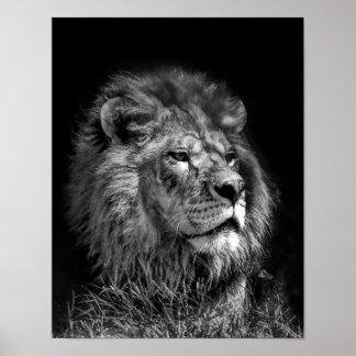 Stolzer junger Löwe Poster