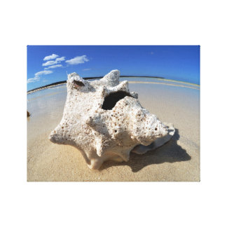 Strand-Muschel Gespannter Galeriedruck
