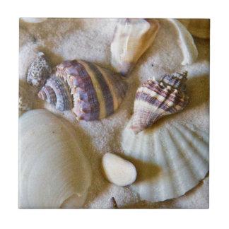 Strand-Muschel-Thema #2 Kleine Quadratische Fliese