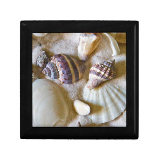 Strand-Muschel-Thema #2 Kleine Quadratische Schatulle