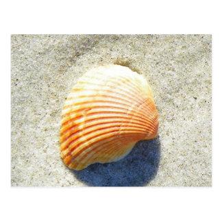 Strand-Sand und Muschel Postkarte