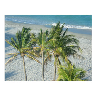 Strand-und Palmen in Hollywood, FL Postkarte