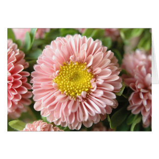Strawflowers Karte