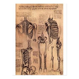 Studie der Skelette Postkarte
